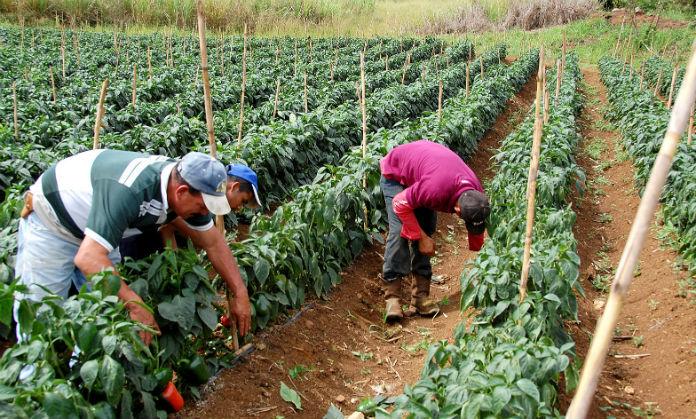 http://cdn.elimpulso.com/media/2016/05/Agricultores.jpg
